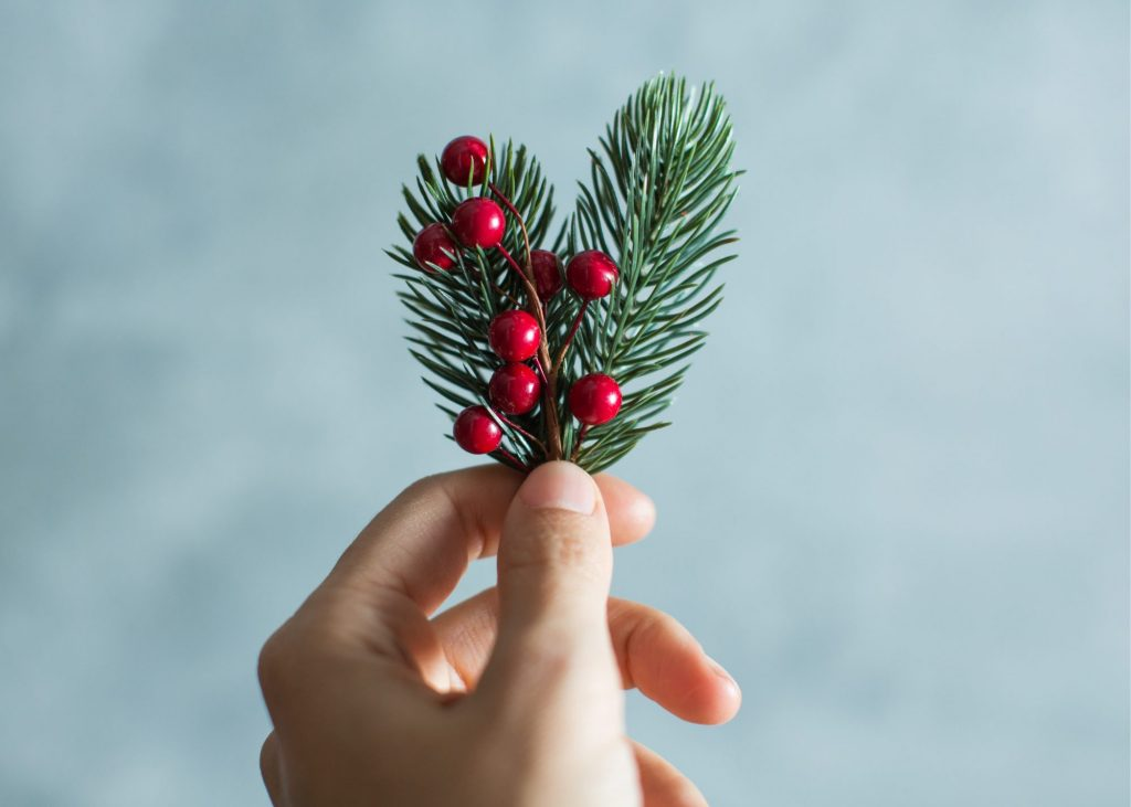 hand holding up pine tree branch with  red berries